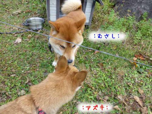 P1080143+AZUKI.jpg