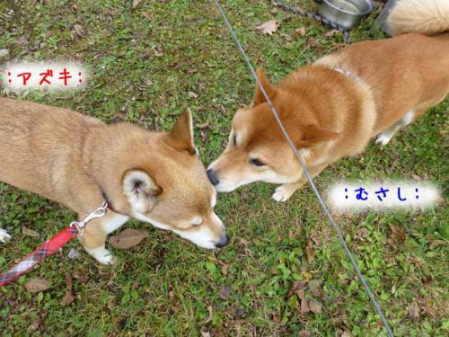 P1080146+AZUKI.jpg