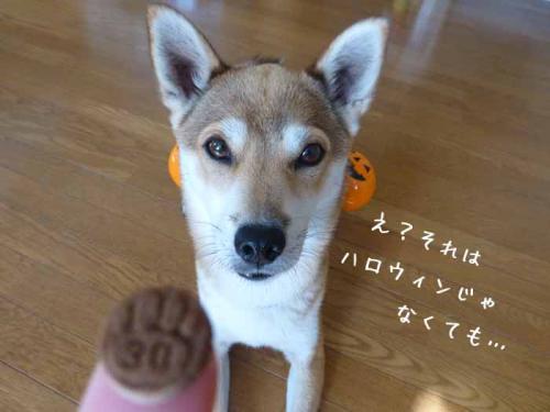P1080429+AZUKI.jpg