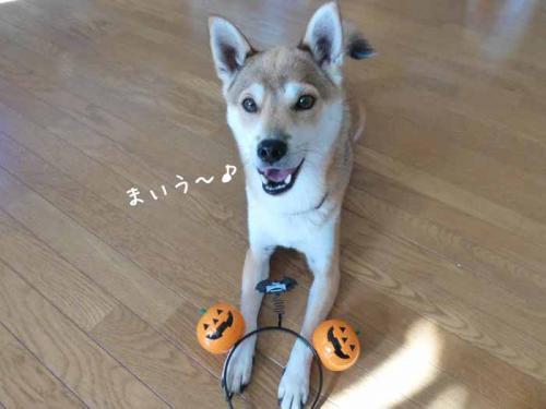 P1080435+AZUKI.jpg
