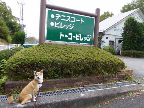 P1080589+AZUKI.jpg