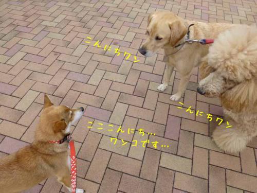 P1080621+AZUKI.jpg