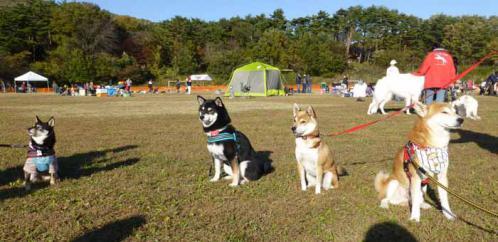 P1090050+AZUKI.jpg