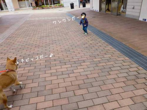 P1090277+AZUKI.jpg