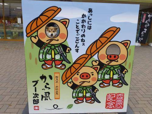 P1090377+AZUKI.jpg