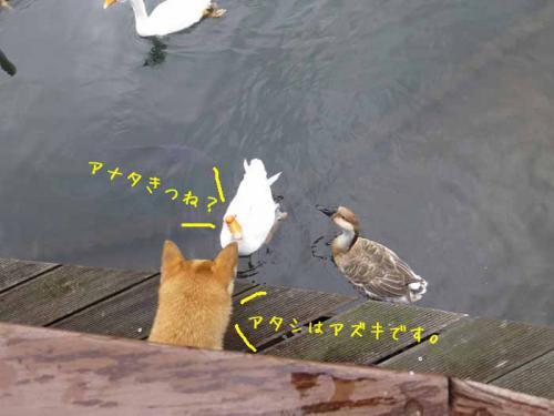 P1090467+AZUKII.jpg