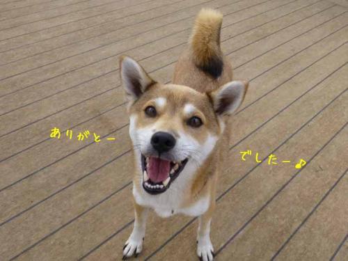 P1090593+AZUKI.jpg