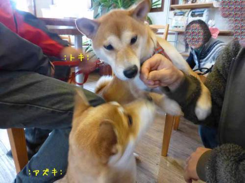 P1090860+AZUKI.jpg