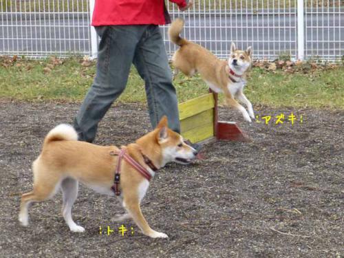P1090901+AZUKI.jpg