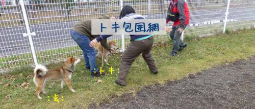 P1090948+AZUKI.jpg