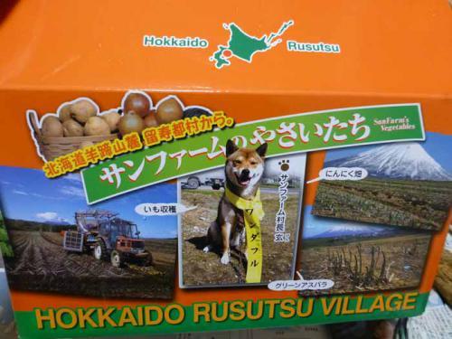 P1100039+AZUKI.jpg