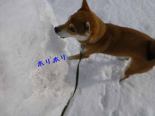 P1100467+AZUKI.jpg