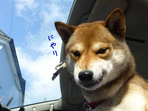 P1100851+AZUKI.jpg