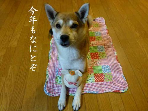 P1100969+AZUKI.jpg