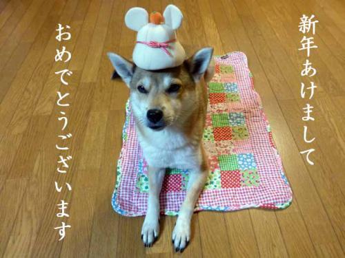 P1100973+AZUKI.jpg