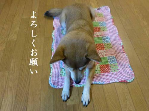 P1100977+AZUKI.jpg