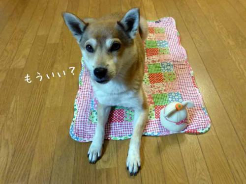 P1100984+AZUKI.jpg