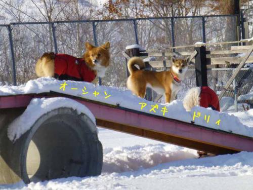 P1110058+AZUKI.jpg