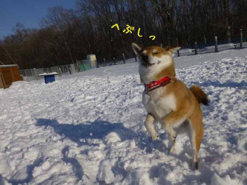 P1110110+AZUKI.jpg