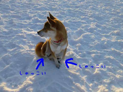 P1110117+AZUKI.jpg