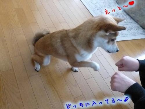 P1160261_AZUKI.jpg