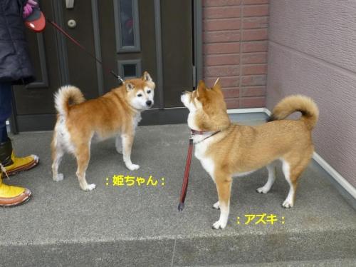 P1160413_AZUKI.jpg