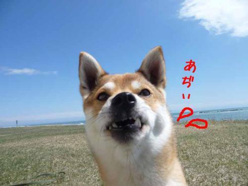 P1360614-AZUKI.jpg