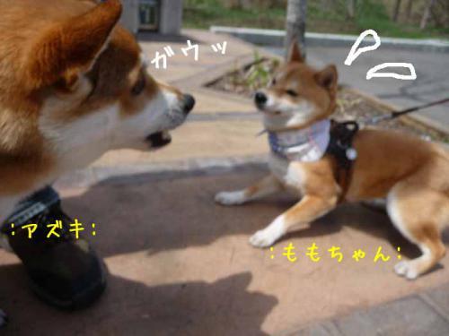 P1360816-AZUKI.jpg