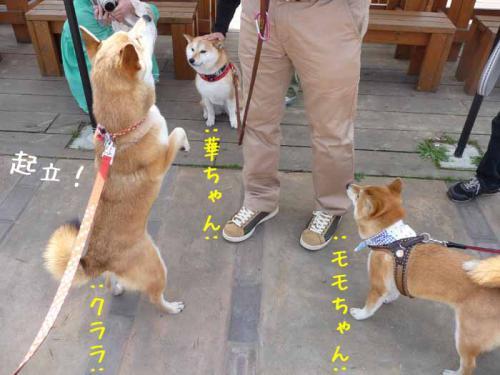 P1360822-AZUKI.jpg