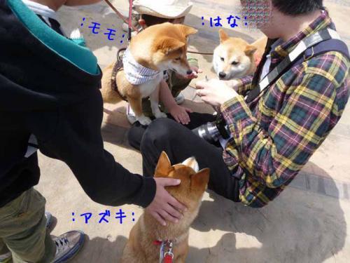 P1360833-AZUKI.jpg