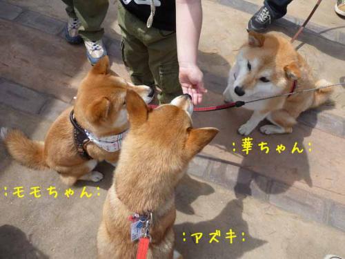 P1360842-AZUKI.jpg