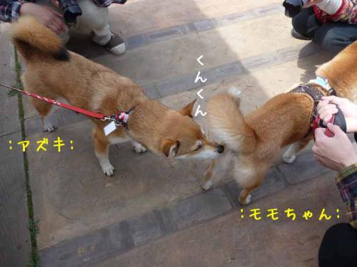 P1360851-AZUKI.jpg