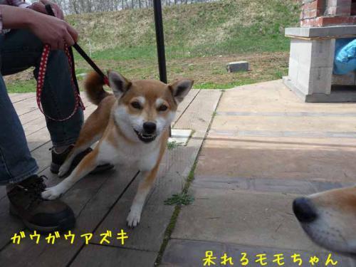 P1360855-AZUKI.jpg