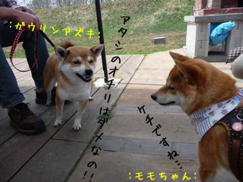 P1360858-AZUKI.jpg