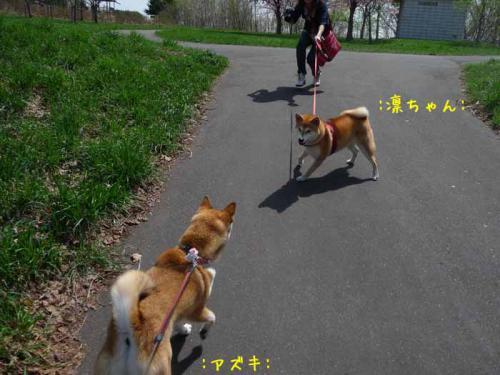 P1370189-AZUKI.jpg