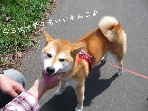 P1370195-AZUKI.jpg