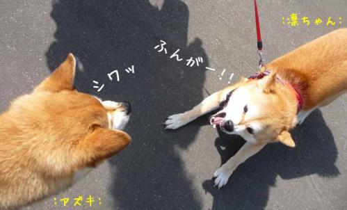 P1370199-AZUKI.jpg