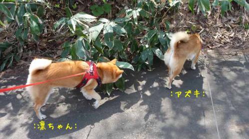 P1370206-AZUKI.jpg