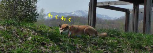 P1370208-AZUKI.jpg