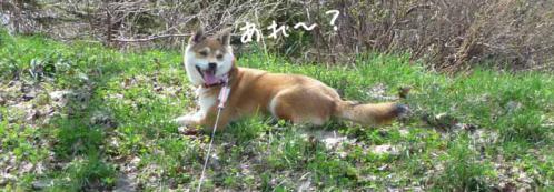 P1370209-AZUKI.jpg