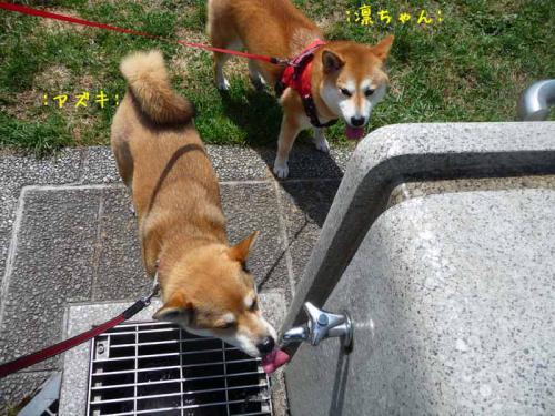 P1370213-AZUKI.jpg