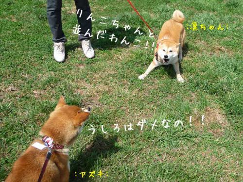 P1370215-AZUKI.jpg