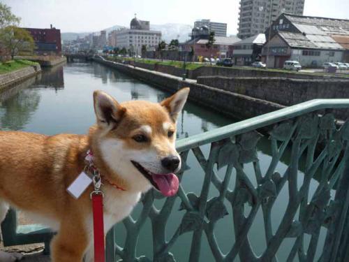 P1370368-AZUKI.jpg