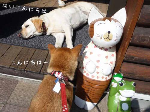 P1370391-AZUKI.jpg