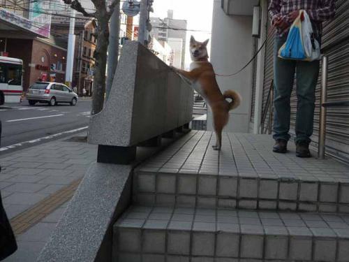 P1370462-AZUKI.jpg