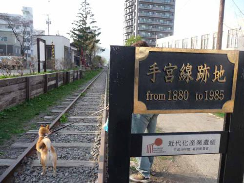 P1370467-AZUKI.jpg