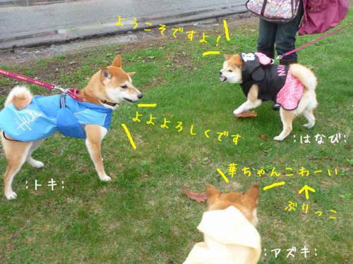 P1370554-AZUKI.jpg