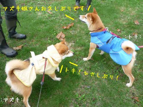 P1370559-AZUKI.jpg