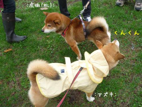 P1370579-AZUKI.jpg