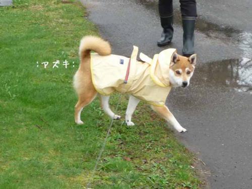 P1370582-AZUKI.jpg